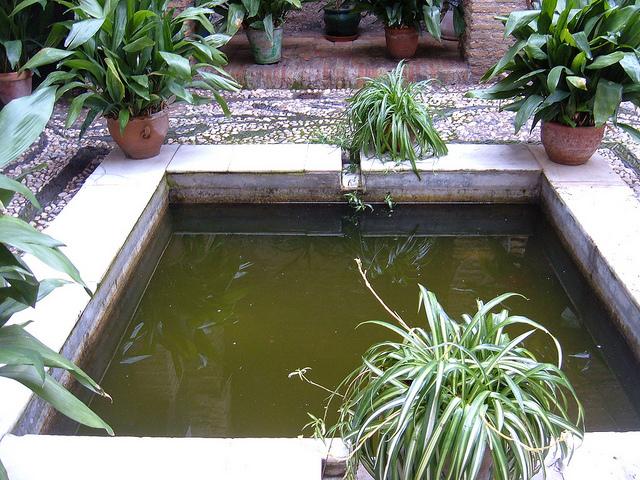 Baños Romanos Granada: los Baños Árabes del Bañuelo en Granada – Travelling Dijuca