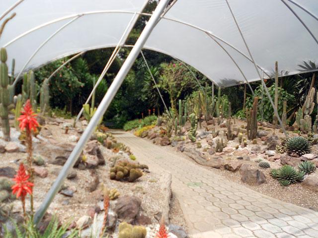 cactus jardín botánico Quito